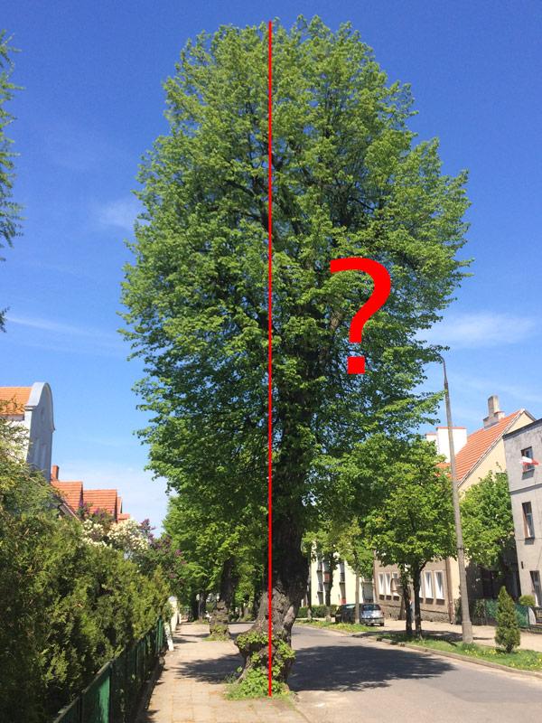 Wysokość drzewa - pomiar