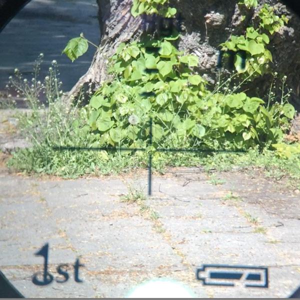 pomiar-drzewo-1
